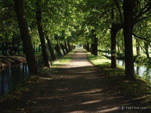 Linden alley in Petergof