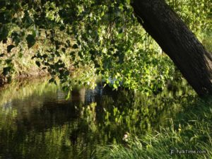 Linden reflection
