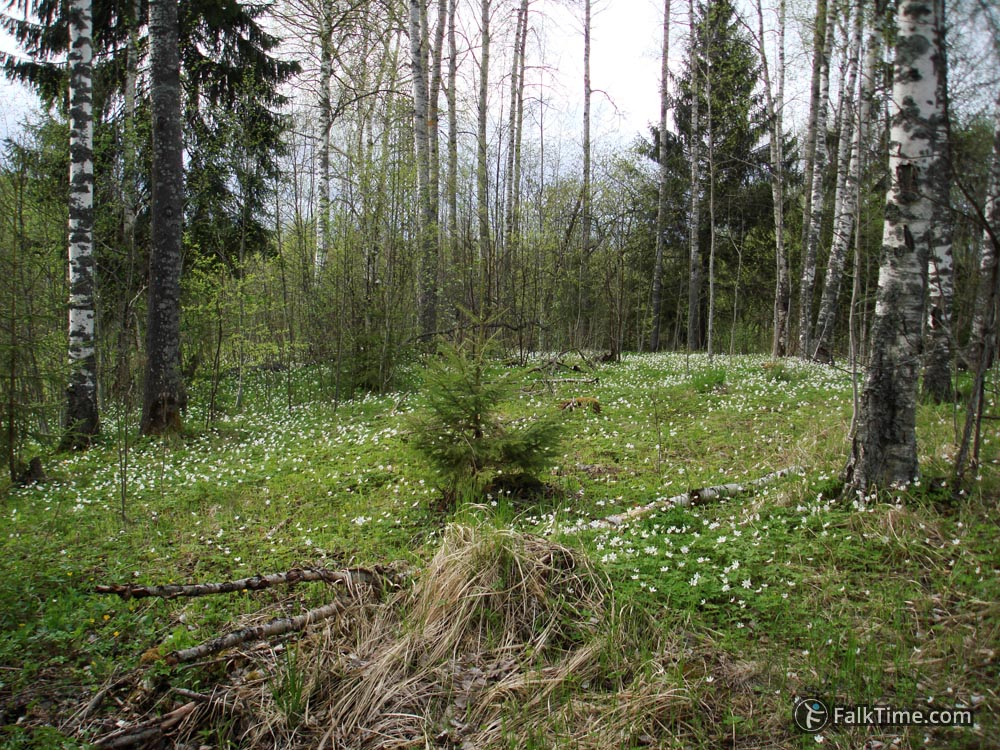 Spring in forest, Leningrad region